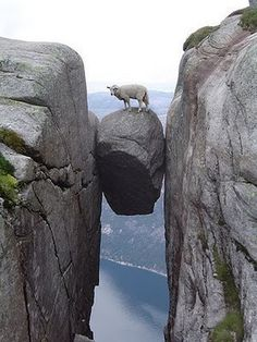 Between a rock and a hard place #perspective #rock #sheep #photography
