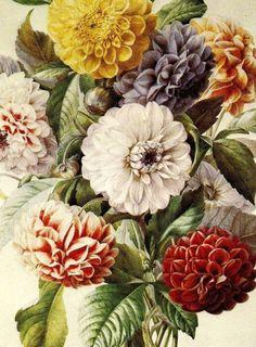 flowers #illustration #graphic