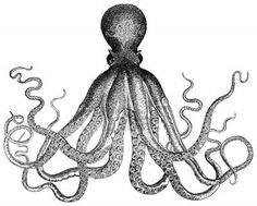 Octopus #illustration #octopus