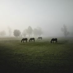 Herde on the Behance Network #horses #fog #heckel #photography #jrgen