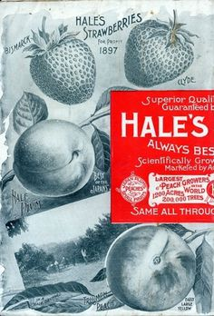 J.H.Hale Fruit Catalogs, 1897 « Vintage Me Oh My #1897 #fruit #vintage #catalogs