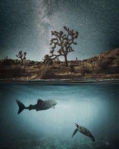 Dreamlike Photo Manipulations by Emma Karlsson