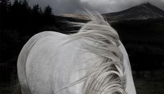 animals | David Boni #photography