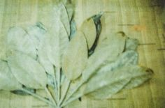 WATERSCHOENEN: Cy Twombly in Bozar #twombly #cy #polaroid #photography #leaves