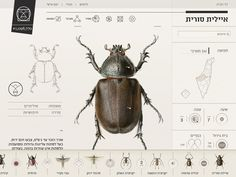 Insect Definer, Yael Cohen #insect #design #web #cohen