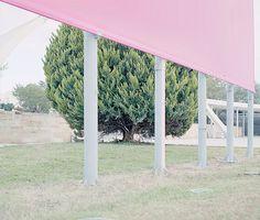 Tree study II | Flickr Photo Sharing! #photography #tree