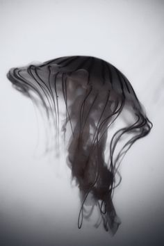 Jelly by Andrew Vox Photography #photography #jelly #black and white