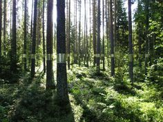clear 1 600x450 #mirror #cut #trees