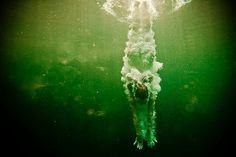 Etoday: интернет журнал про последние новости дня в мире, фото, картинки, лучшие фотог #swimming #photography #water #diving