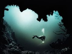 Underwater Photography by Julian Calverley