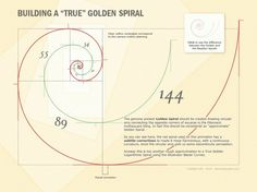 "Building a ""true"" golden spiral #geometry #mathematics #golden #section #beauty"