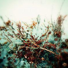 Daniel Johansson #daniel #photography #johansson