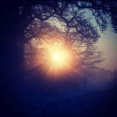 Sunrise in Johnstown, Ireland #wood #photography #nature #beautiful #instagram