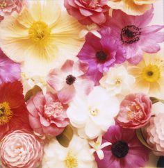 mixedflowerscu #flowers