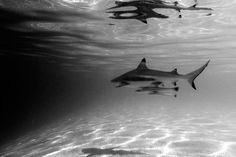 Katani Branding : Motherbird #sharks #photography