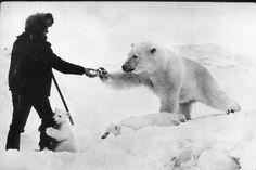 7-1 #bw #polar #retro #bear