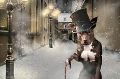 DOG ADVENTURES BY JEANNETTE OERLEMANS