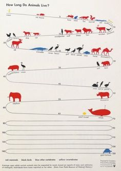 swissmiss #information #infographic #data #visualization #animals #longevity