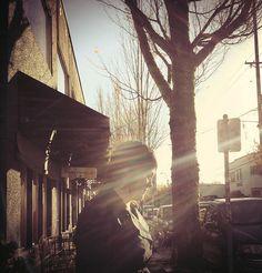 sun #sun #portland #tree