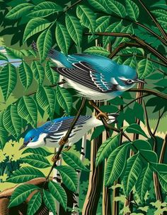 Biodiversity 2 #gary #alphonso