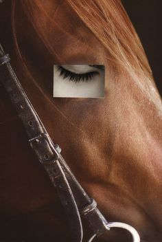 NO TITLE 7 #horse #eye #photography #handmade #surreal #collage