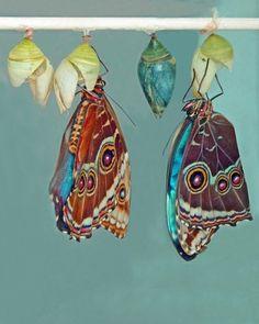 キ  リ  ペ  チ  カ #butterfly