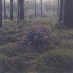 Spaziergang im Käferwald : Amira Fritz #fritz #photography #amira #flowers