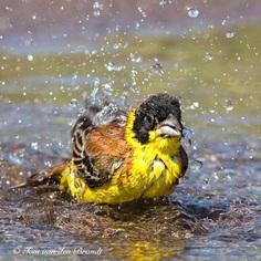 #eye_spy_birds: Brilliant Birds Photography by Tom van den Brandt