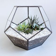 TINY KINGDOM Globe #homewares #terrarium #cacti #interiors #geometric #succulents #craft #plant