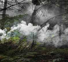 Forest Photography by Ellie Davies