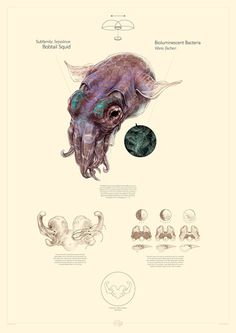 Robert Long #illustration #sea #creature