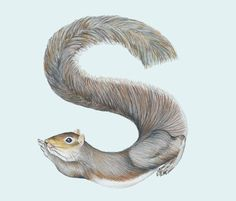 Animals in Alphabet on the Behance Network