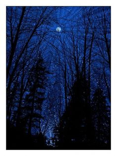 10.12.01.cold_.moon_1.jpg (JPEG Imagen, 675x900 pixels) - Escalado (89%) #print #night #poster #forest #moon
