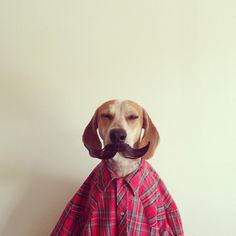 Maddie the Coonhound | feel desain #funny #dog