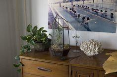 Score + Solder #interior #terrarium #cactus
