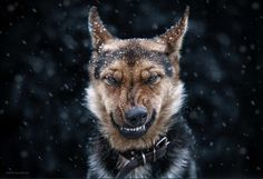 Stunning Animal Portraits by Sergey Polyushko