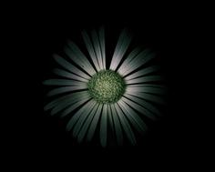Fine Art Flowers Photography by Viera Babecova