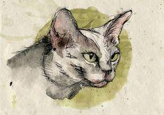 cat082