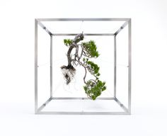 Azuma Makoto #tree #box #bonsai