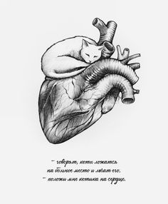 cats can heal - Anastasis - instagram.com/artanastasis/