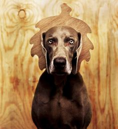 Dogs Photography by William Wegman #inspiration #photography #animal