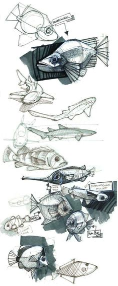 rsz_44_fish1.jpg #sketches