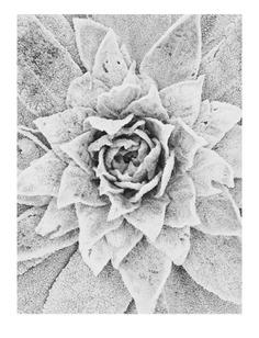 #frozen #plant #vsco PHOTOGRAPHIE © [ catrin mackowski ]