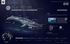 The whale on Web Design Served #web
