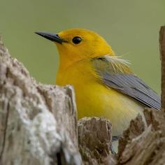 #birdwhisperer: Beautiful Birds Photography by Chris A. Fraley