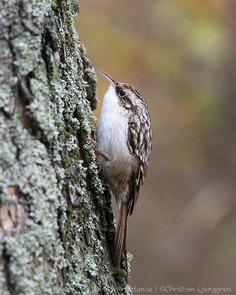 #bird_brilliance: Smashing Birds Photography by Christian Ljunggren