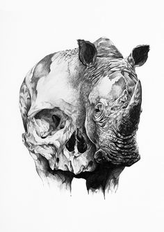 Ivan kamargio illustration #skull #animals #illustration #black and white