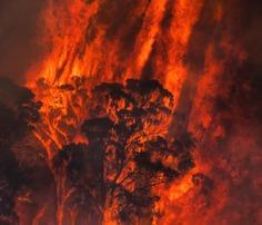 Photographer Matthew Abbott Documents Australia's Bushfire Crisis