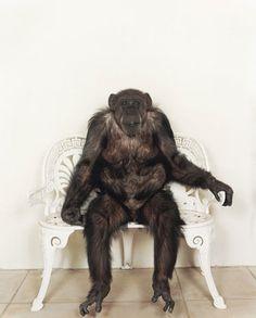 STEFAN RUIZ #ruiz #photography #monkey #stefan