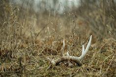 photo #deer #michigan #fall #photography #nature #shed
